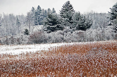 Pines Photograph - Winter Colors by Aimee L Maher Photography and Art Visit ALMGallerydotcom