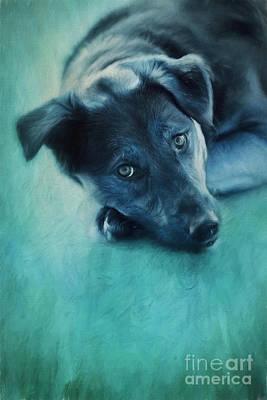 Beloved Photograph - Winter Dog by Priska Wettstein