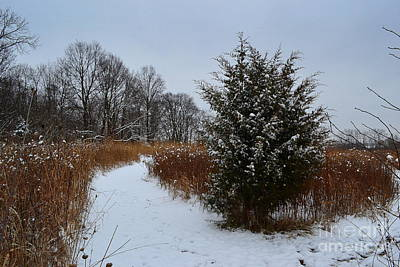 Indiana Photograph - Winter Evergreen Tree Path by Amy Lucid