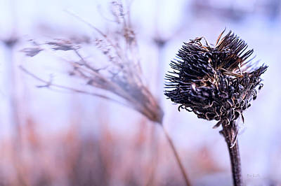 Winter Flowers  Print by Bob Orsillo