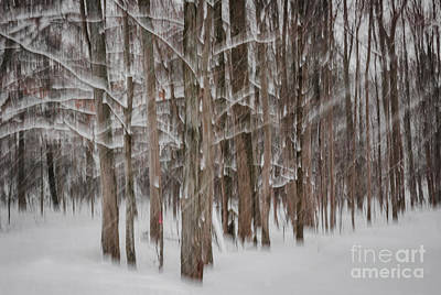 Snowstorm Photograph - Winter Forest Abstract II by Elena Elisseeva