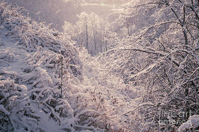 Hoarfrost Photograph - Winter Forest After Ice Storm by Elena Elisseeva