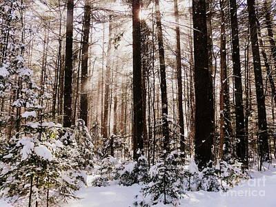 Winter Forest Print by Avis  Noelle
