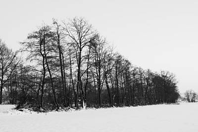 Nature Photograph - Winter Forest by Ivan Slosar