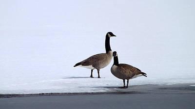 Winter Geese Print by Michael Sokalski