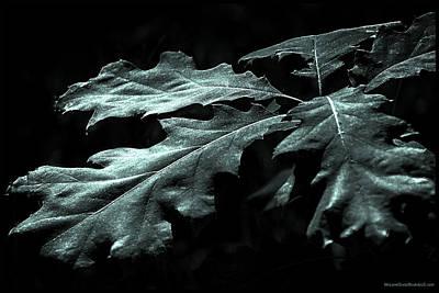 North America Photograph - Winter Green by LeeAnn McLaneGoetz McLaneGoetzStudioLLCcom