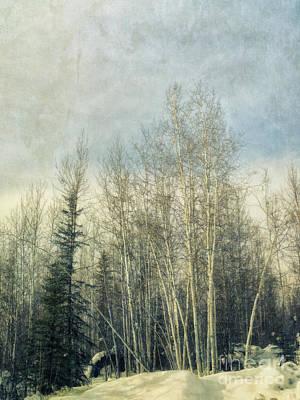 Winter Grove Print by Priska Wettstein