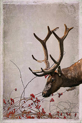 Of Bittersweet Photograph - Winter King by Julie Magers Soulen