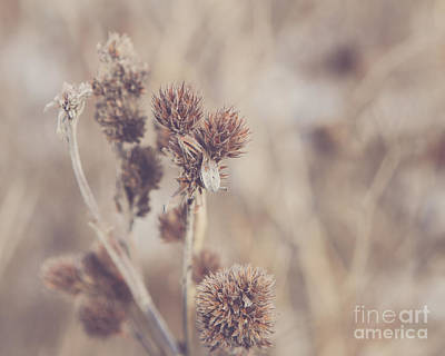 Flowers Photograph - Winter by Maren Misner