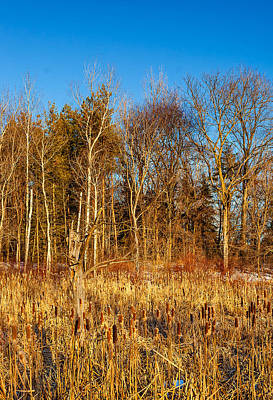 Trees Photograph - Winter Marsh by Steve Harrington