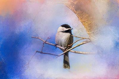 Chickadee Photograph - Winter Morning Chickadee by Jai Johnson