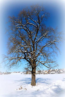Winter Oak Print by The Creative Minds Art and Photography