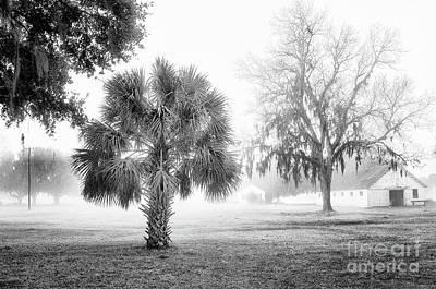 Fog Photograph - Winter Palmetto by Scott Hansen