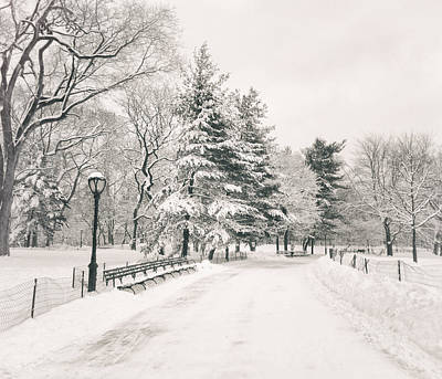 Winter Path - Snow Covered Trees In Central Park Print by Vivienne Gucwa