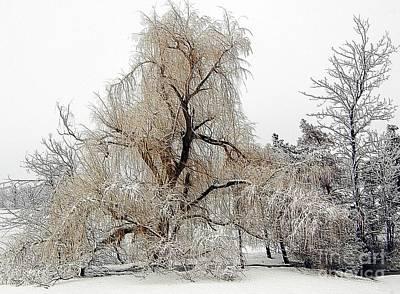 Winter Scene Print by Kathleen Struckle
