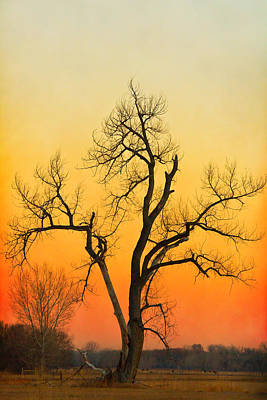Landscape Photograph - Winter Season Sunset Tree by James BO  Insogna