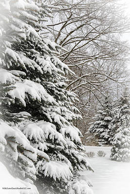 Frost Photograph - Winter Snow Covered Pines by LeeAnn McLaneGoetz McLaneGoetzStudioLLCcom