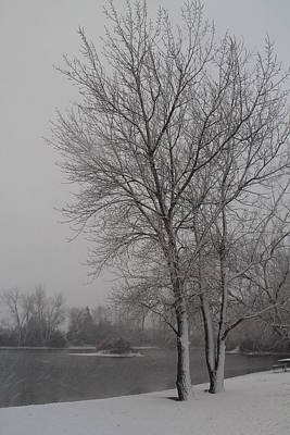 Nature Photograph - Winter Storm by Alicia Knust