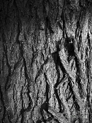 Neurotic Images Photograph - Winter Sunlight Tree Bark Bw by Chalet Roome-Rigdon