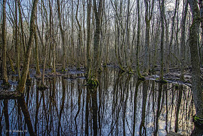 Winter Swamp Print by Brian Wallace