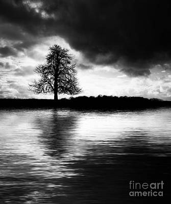 Winter Tree Light   Print by Tim Gainey