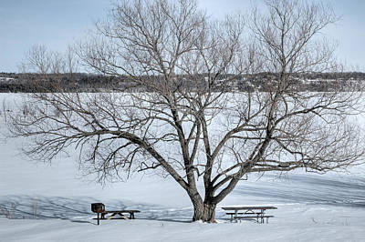 Winter Landscape Photograph - Winter Tree - Pinhey's Point. Ontario by Rob Huntley