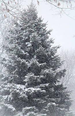Child Photograph - Winter Tree by  The Art Of Marilyn Ridoutt-Greene