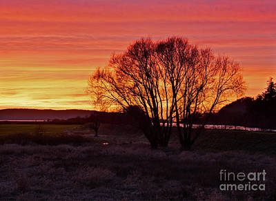 Winter Tree With Red Sky Print by Valerie Garner