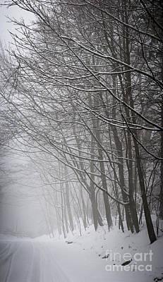 Snowstorm Photograph - Winter Trees Along Snowy Road by Elena Elisseeva