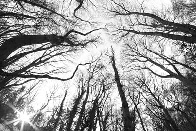 English Digital Art - Winter Trees At Sunset Fisheye by Online Presents