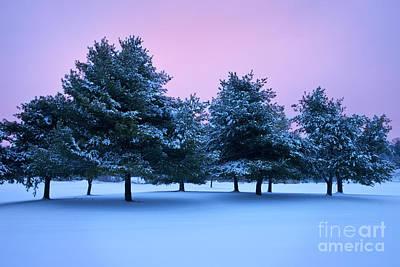 Winter Trees Print by Brian Jannsen