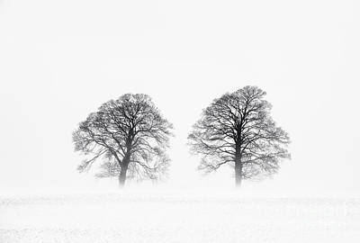 Winter Pine Trees Print by Tim Gainey