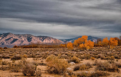 Grey Clouds Photograph - Winter Vs Autumn by Cat Connor