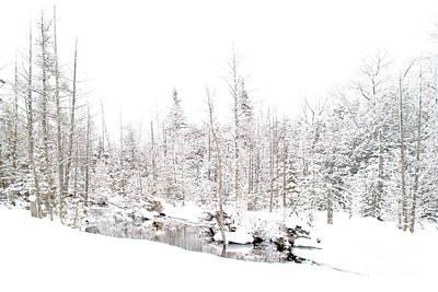 Photograph - Winter Wasteland by Andrea Kollo