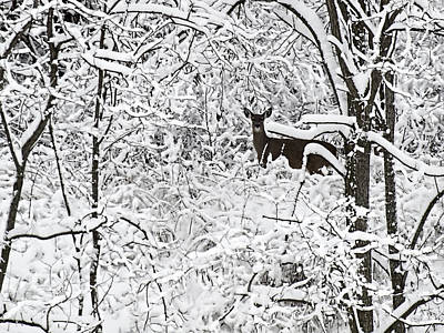 Winter Whitetail 2 Print by Thomas Young