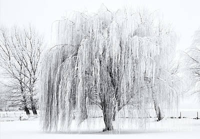 Weeping Photograph - Winter Willow by Mike  Dawson