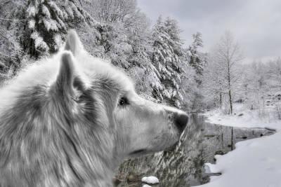 Beautiful Scenery Digital Art - Winter Wolf by Lori Deiter
