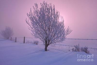 Winter Wonder Land Print by Dan Jurak