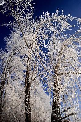 Trees Photograph - Winter Wonderland 7 by Terry Elniski