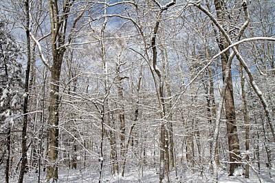 Snowstorm Photograph - Winter Wonderland by Betsy C Knapp