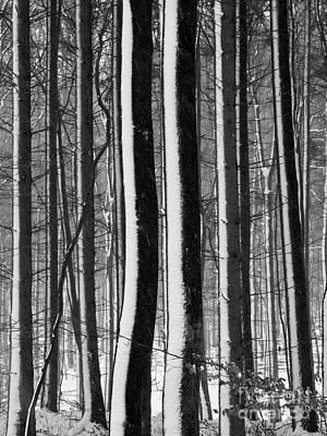 Landscape Photograph - Winter Woodlands 2 by Heiko Koehrer-Wagner