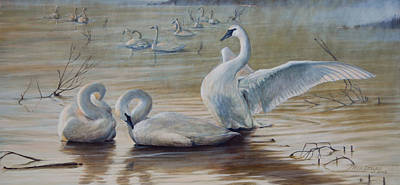 Swan Painting - Wintering Trumpeters by Rob Dreyer AFC