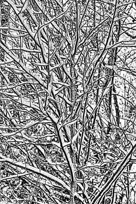 Snowstorm Mixed Media - Winters Branches by John Haldane