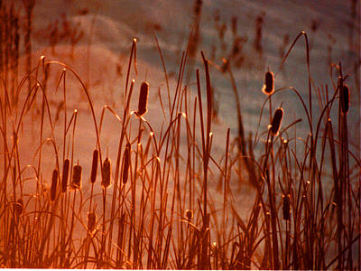 Photograph - Winter's Glow by R Thomas Brass