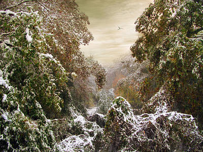 Rural Digital Art - Winter's Lace by Jessica Jenney