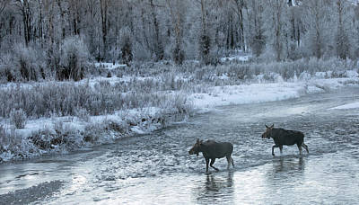 Winter's Majesty Print by Sandy Sisti