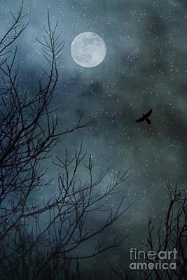 Blackbird Photograph - Winter's Silence by Trish Mistric