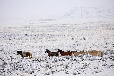 Washakie Photograph - Winterstill by Sandy Sisti