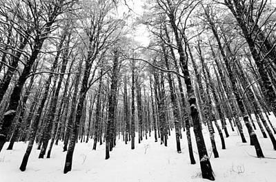 National Park Photograph - Wintertime by George Atsametakis
