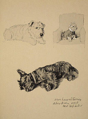 Wire-haired Terrier, Aberdeen And West Print by Cecil Charles Windsor Aldin